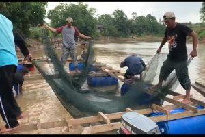 Wujudkan Impian Kesejahteraan Masyarakat Desa Kumba Melalui Dukungan Teknologi Karamba Jaring Apung Ikan Lokal, Pakan Alami dan Olahan Tembikar